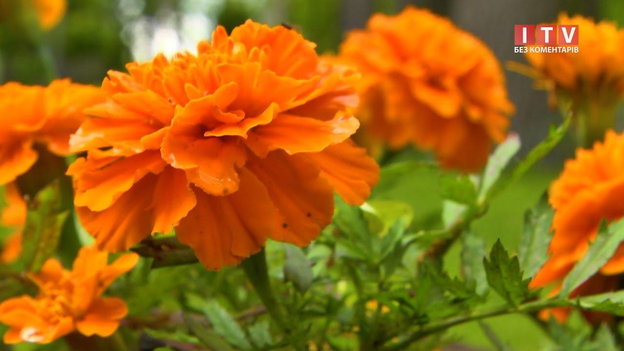 В Ірпені висадили 10 тисяч квітів